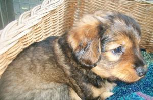 Entzuckende Hundewelpen Suchen Neues Zuhause In Villach 5 Minuten Nachrichten Aktuelles
